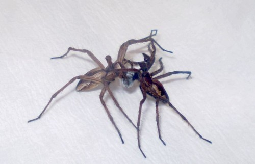 Why male spiders need to get their game on -- or die