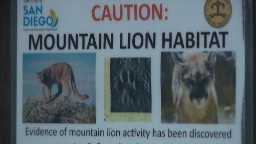 Mountain lion killed by wildlife officials was the one that attacked 4-year-old-boy