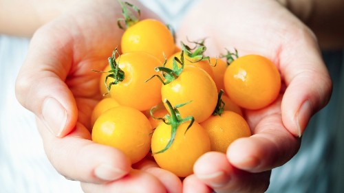 10 secrets to growing the tastiest tomatoes