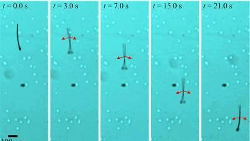 MagnetoSperm: A tiny swimming robot inspired by human sperm