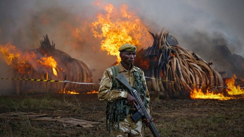 More than boots and bullets: This app could help turn the tide on poaching - Los Angeles Times