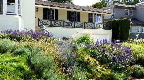 They replaced the lawn with a gorgeous drought-tolerant meadow that doesn't need mowing - Los Angeles Times