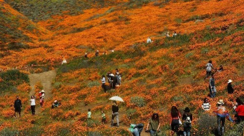 Enjoy that gorgeous super bloom, but don't go off the hiking trail to do it