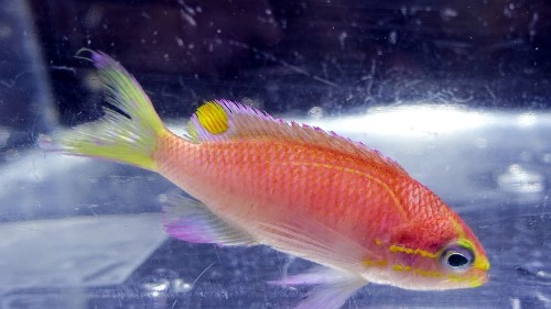 No fish story: There's a fish named Obama. Actually, there are two
