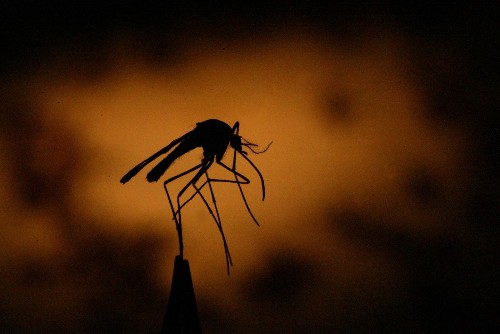 Santa Ana to be sprayed with insecticide amid big West Nile outbreak - Los Angeles Times