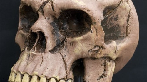 As much as 2.6% of your DNA is from Neanderthals. This is what it's doing