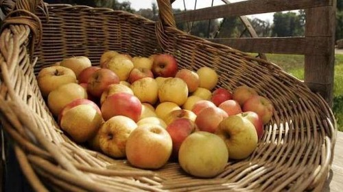 Apples are in season. We have recipes