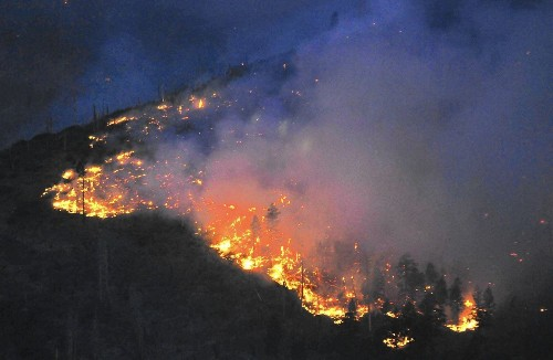 Nature replants its own burned forests, environmentalists say