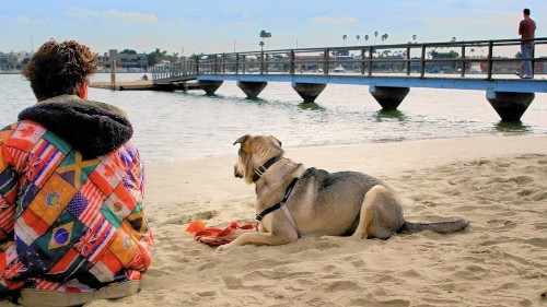 'Rescue Dogs' is so annoying, not even cute canines can save the day - Los Angeles Times