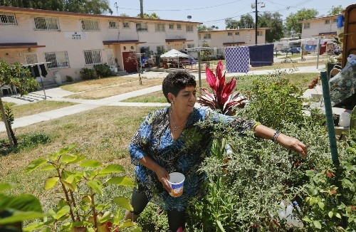 Scientists unlock a secret to Latinos' longevity, with hopes of slowing aging for everyone - Los Angeles Times