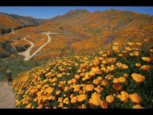 Other Western states where wildflowers will put on a show this spring and summer