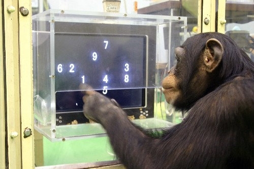 Chimpanzees make monkeys of humans in computer game