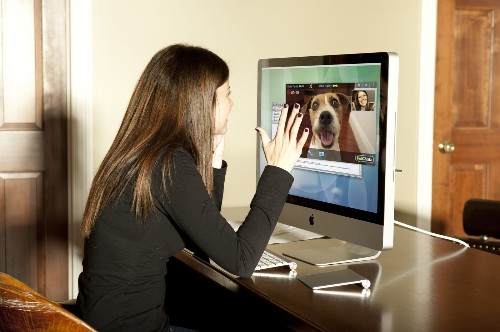 6 ways you can spy on your pet when you're not at home
