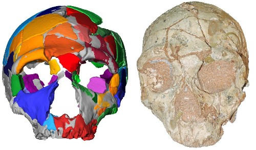 210,000-year-old skull in Greece is earliest sign of modern humans in Europe or Asia