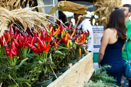 Five cool California food festivals to visit in September