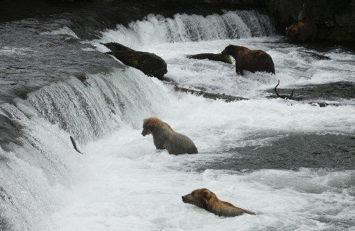 National park photo ops: This trail takes you to bears, salmon and white water