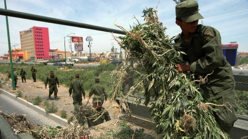 Here's what's behind Mexico's radical move toward legalizing marijuana during its war on drugs - Los Angeles Times