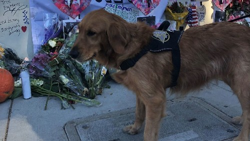 Therapy dogs come to Thousand Oaks to comfort mourners - Los Angeles Times