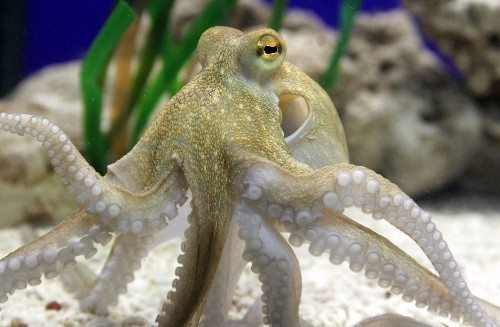 What the octopus can teach us