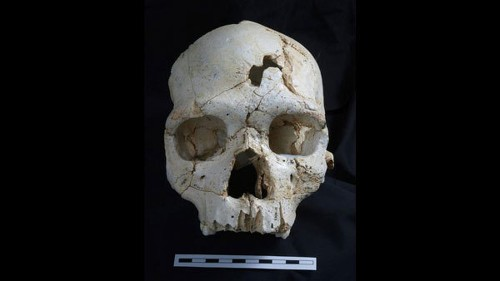 430,000-year-old skull suggests murder is an 'ancient human behavior' - Los Angeles Times