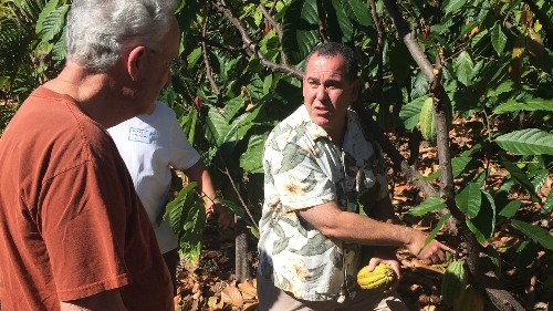 Hawaii cacao farm lets you sample the chocolate fruits of its labors - Los Angeles Times