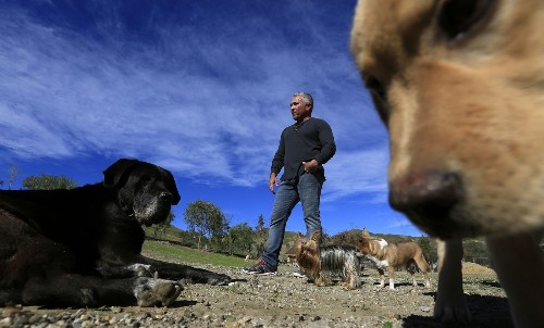 'Dog whisperer' Cesar Millan defends himself amid animal cruelty investigation