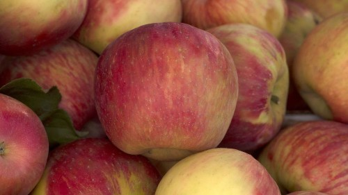 The curse of the Honeycrisp apple