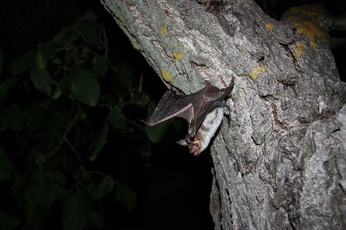 Bats use polarized light patterns to navigate