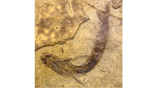 In fossilized fish eye, rods and cones preserved for 300 million years - Los Angeles Times