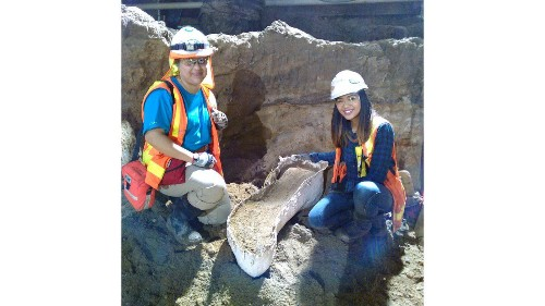 Another set of fossils discovered at Metro subway excavation site