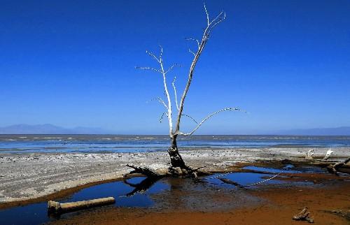 Salton sea faces catastrophic future, toxic dust storms, officials say