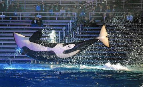 Are SeaWorld's whales better off staying in their glass-and-concrete enclosures?