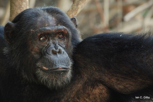 Monkey see, monkey kill: The evolutionary roots of lethal combat