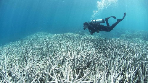 Scientists call for urgent action to save the world's coral reefs
