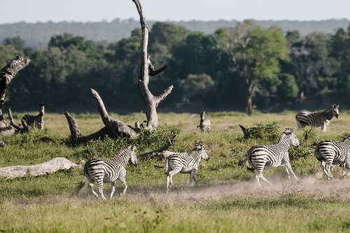 Find rhinos, lions and more African wildlife at Zimbabwe's national parks - Los Angeles Times