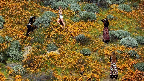 'Super bloom' shutdown: Lake Elsinore shuts access after crowds descend on poppy fields