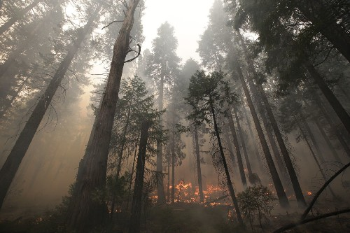 Rim fire 'burning its way into record books,' official says - Los Angeles Times