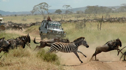 Watch zebras and wildebeests whiz by during Tanzania's Great Migration