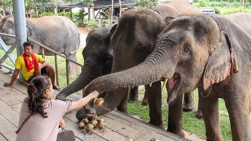 Thailand: Tour lets visitors interact with elephants