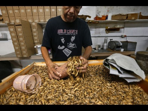 From icky bugs to good grub: Why more people are eating insects