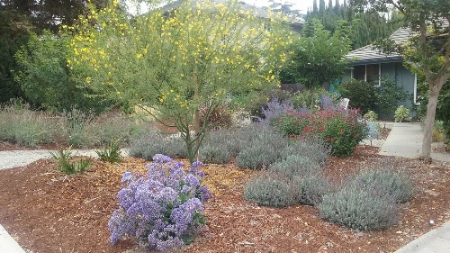 Before and after: A Tustin garden goes from thirsty lawn to drought-tolerant oasis - Los Angeles Times