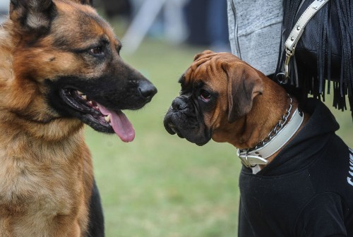 Man's best friend for a long time: Dogs go back 33,000 years, study finds