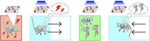 Using light, scientists make bad memories good in mice - Los Angeles Times