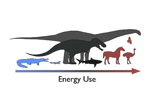 Dinosaurs were neither cold-blooded nor warm-blooded, study finds
