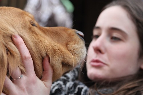 Golden retriever comfort dogs, four-legged healers, return to Boston - Los Angeles Times