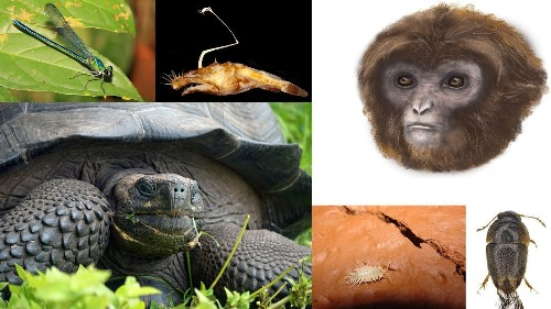 Meet some amazing animals and plants that are new to science - Los Angeles Times