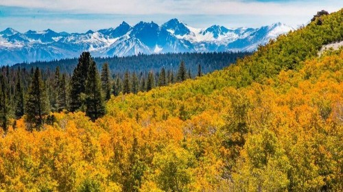 California's fall colors are off to slowest start in years. By now, there are usually blankets of gold. - Los Angeles Times
