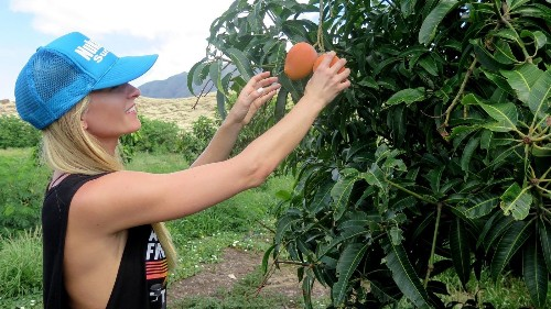 No one vacations in Hawaii to pick fruit. A new chef-led tour changes that