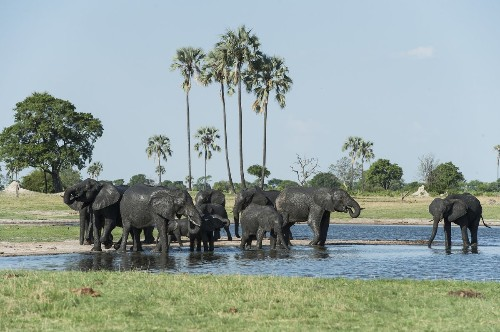 Wildlife safaris in Zambia and Zimbabwe national parks - Los Angeles Times