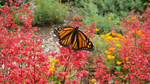Here are some fall plant sales to get you started